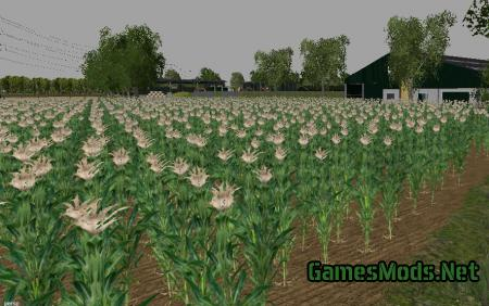 MAIS TEXTUUR V1 MP