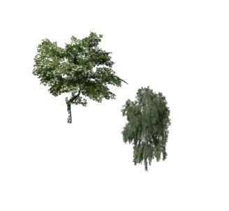 TWO PLACEABLE TREES V1.0